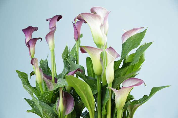 慶祝周年紀念要送什麼花?告訴你結婚周年紀念名稱及對應花語氹另一半! 結婚6周年紀