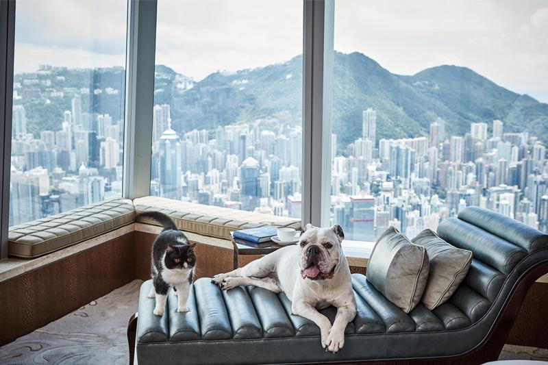 【10-12月Staycation優惠】五星級奢華酒店、維港靚景加好玩主題住宿: