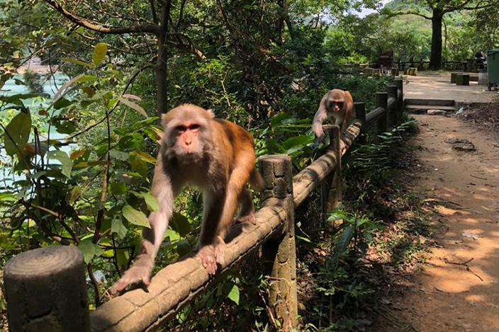 【行山路線推介】情侶行山打卡熱點 水塘 行山徑 靚景初級行山路線 不過行山都緊記要帶走自己的垃圾,不要污染這片美麗的大自然。另外路線起點可能會遇到猴子,就盡量不要靠近或接觸,惹來猴子以為有食物而追過來