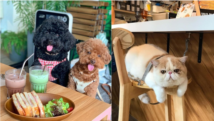 狗狗好去處2021 嚴選14間寵物友善餐廳、寵物cafe!貴婦狗cafe、刺蝟cafe超治癒 寵物友善餐廳2021推介丨#7 Lazy CreaturesLazy Creatures 慵懶生物的宗旨是