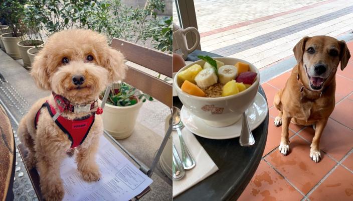 狗狗好去處2021 嚴選14間寵物友善餐廳、寵物cafe!貴婦狗cafe、刺蝟cafe超治癒 寵物友善餐廳2021推介丨#3 Le Pain Quotidien來自比利時的Le Pain Quotid