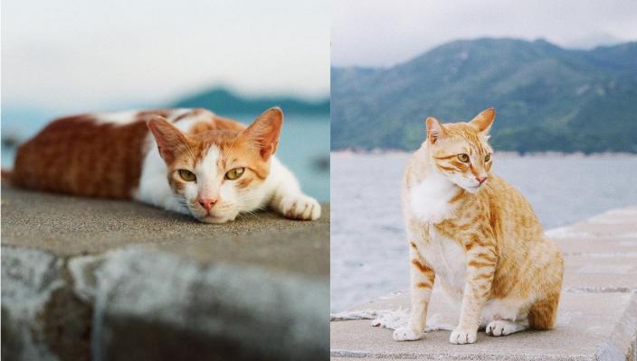 情侶好去處2021丨約會放閃打卡熱點!夢幻花海丶電影取景地丶港版貓島 除了大澳有