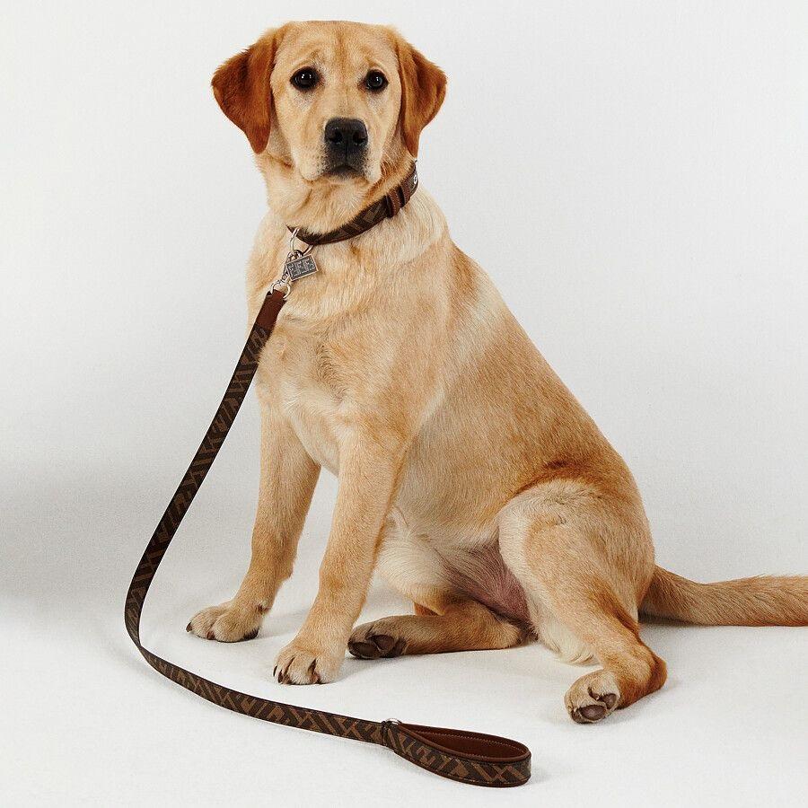 【寵物禮物】FENDI 推出寵物用品系列   為毛孩添置時尚外套、頸圈、狗繩、手提袋 FENDI 寵物用品系列:狗繩
