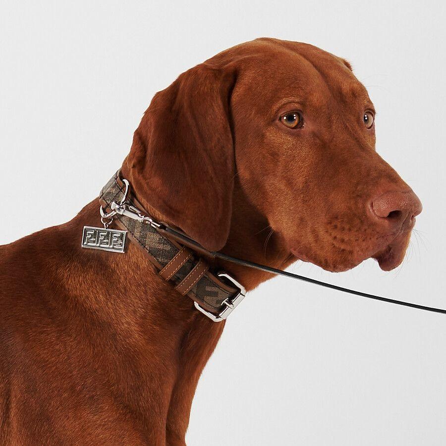 【寵物禮物】FENDI 推出寵物用品系列   為毛孩添置時尚外套、頸圈、狗繩、手提袋 FENDI寵物用品系列:寵物旅行袋