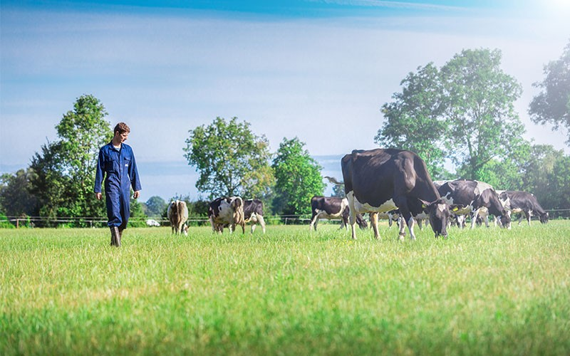 超級奶爸何基佑父子出走!荷蘭搵牛牛趣事多