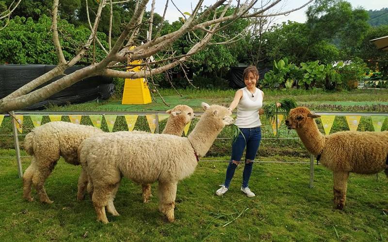親親小羊駝 秋冬必遊3大親子農莊
