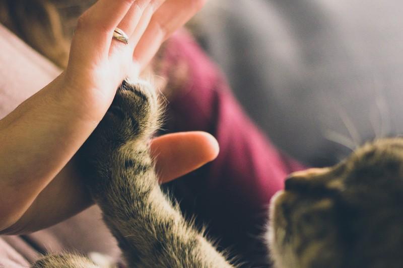 愛協:無證據指新型肺炎會傳染寵物