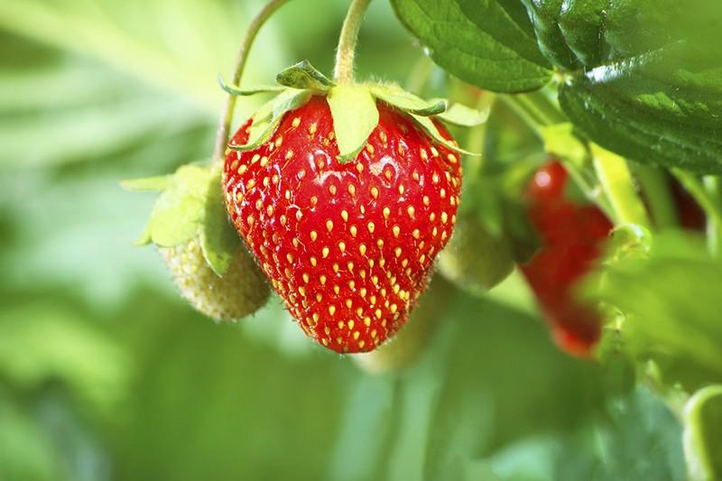 教你8款水果的挑選要訣