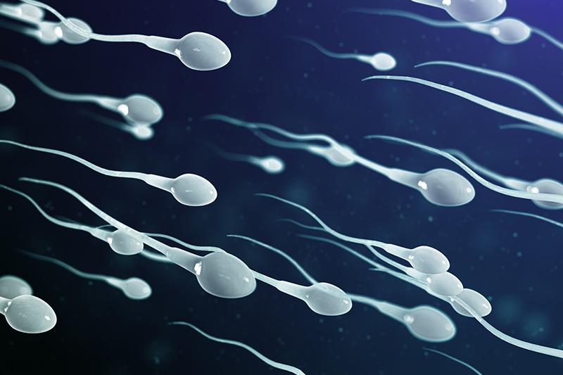 人工受孕成功率低? 3個方法增加人工受孕懷孕率