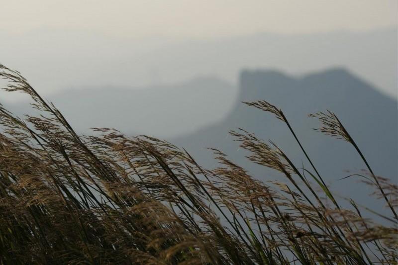 芒草季節 香港賞芒、蘆葦草熱點推介 大東山、昂平、飛鵝山親子郊遊打卡路線+難度