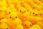 唔duck掂!專家:沖涼鴨仔含大量細菌